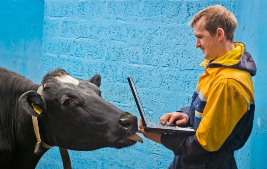 cow-computer